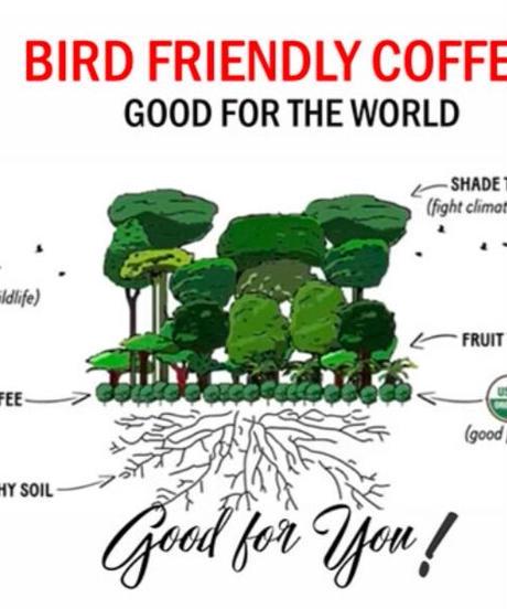 フレンチロースト(コロンビア メサデ サントス農園 JAS Organic 、Bird Friendly )  200g