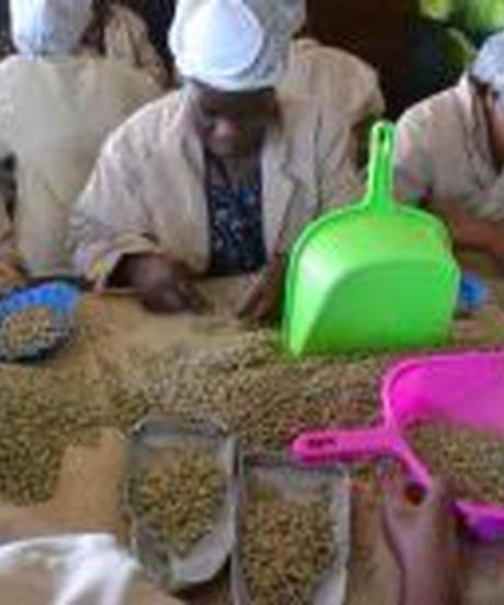 ケニア AA ギチャサイニ  ギカンダ農協 ニェリ地域 ウォッシュ200g