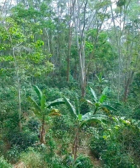 コロンビア メサデ サントス農園 JAS Organic 、Bird Friendly      200g