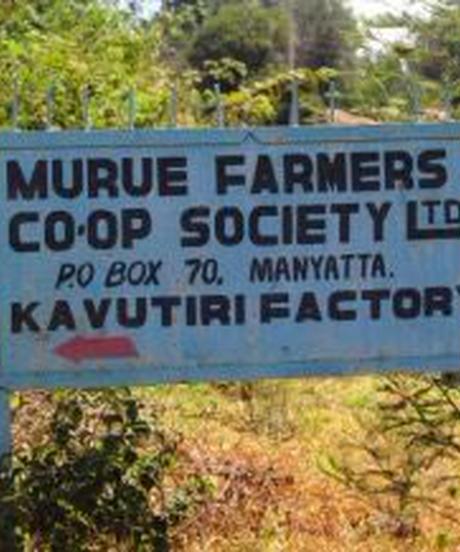 ケニア AA カブチリ   ルニェンジェス ムルエ農協 ウォッシュ  200g