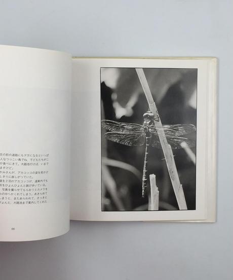 Title/ おてんき Author/ 北井一夫