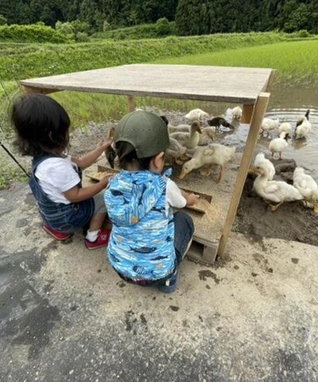 令和3年 七〇八米 蛍 HOTARU 5kg  合鴨&アヒル農法