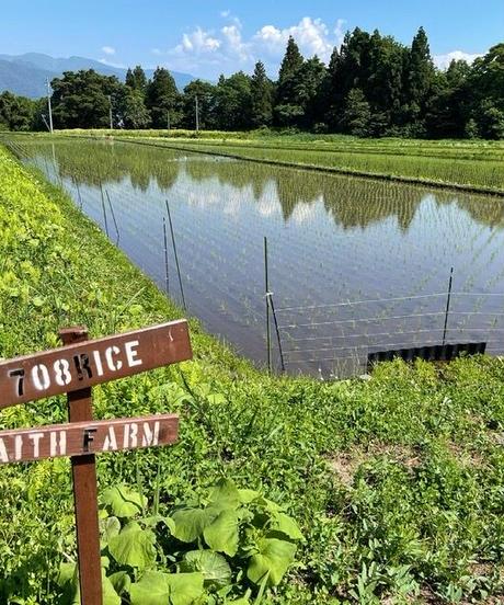 令和3年 七〇八米 蛍 HOTARU 10kg  合鴨&アヒル農法