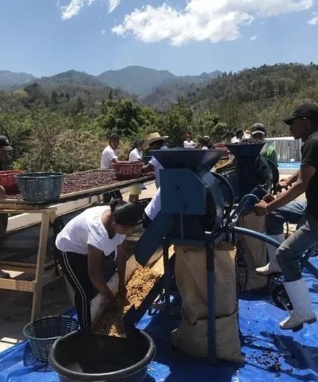 [100g]グアテマラ グッドコーヒーファームザフュージョンドライウォッシュ GUATEMARA GCF THE FUSION DRY WASH