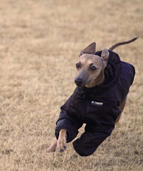 DOWN-JACKET For Italian Greyhound