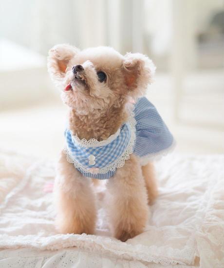 【Picnic of Marie Antoinette】Sweet Vichy Dress (スィートヴィシードレス) Blue(ブルー)Mサイズ