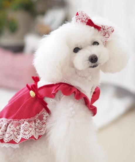 【 Raspberry Sweet 】ラズベリースゥイート レーシーバレッタ
