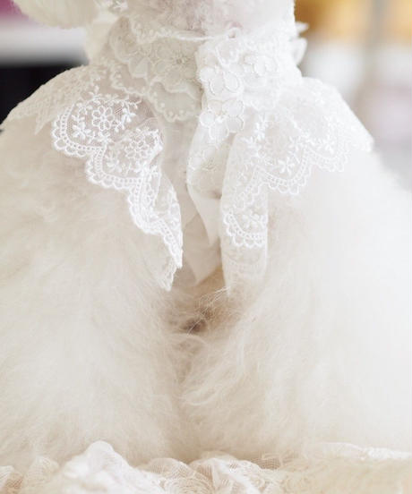 "Party Fairies(パーティフェアリーズ)シリーズ ""Fleurs De Citronnier ""(フルール ドゥ シトロニエ) XSサイズ・Sサイズ"