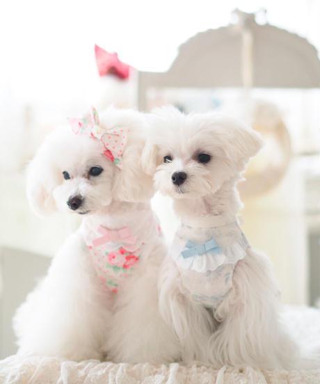 Flower Dolce Girls(フラワードルチェガールズ)Mサイズ