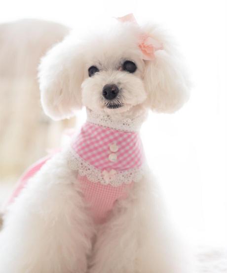 【Picnic of Marie Antoinette】Sweet Vichy Dress (スィートヴィシードレス)pink (ピンク)Mサイズ