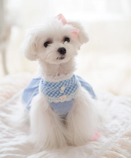 【Picnic of Marie Antoinette】Sweet Vichy Dress (スィートヴィシードレス)Blue(ブルー) XSサイズ・Sサイズ