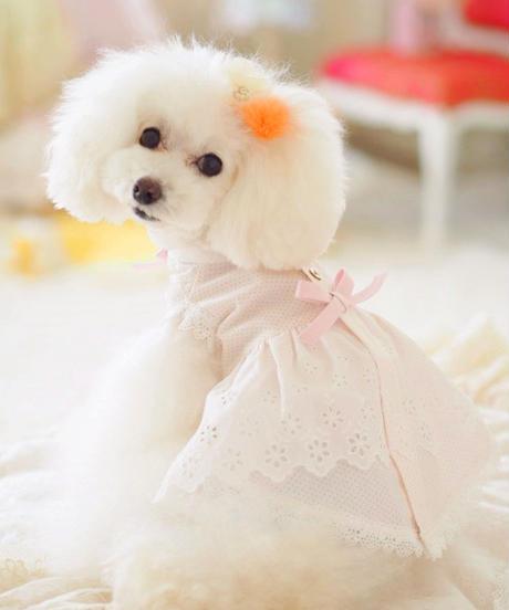 ※残りわずか※【 Picnic of Marie Antoinette】Trianon Princess(トリアノンプリンセス)サイズM/L