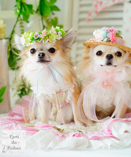【AngelicMoonStyleforpets×Parti du Ruban】Sweet Garden Picnic Party(ガーデンピクニックパーティ)