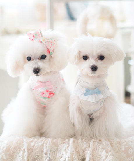 Flower Dolce Girls(フラワードルチェガールズ)XSサイズ/Sサイズ