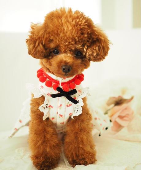 """""""残り3点""""Mサイズ【Sweetie Heidi】""""Cherry-berry -bonbon""""(チェリーベリーボンボン)"""
