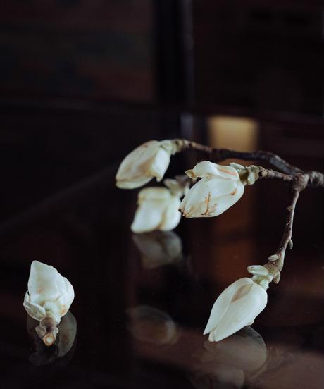 花を着るブラウス#03【ハクモクレン】-darknavy-
