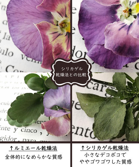 かんたん・綺麗・たくさん!生花そっくりに作る新しい乾燥法 ルミエールドライフラワー講座【シルバーセット】