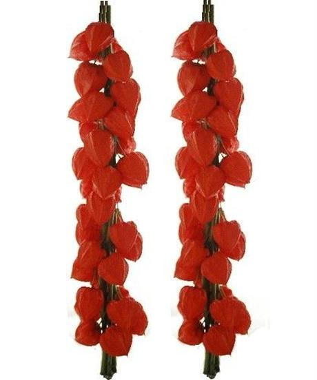 ほおずき切り花 葉なし 5本 ×2束