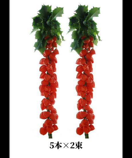 ほおずき切り花 葉付き 5本 ×2束