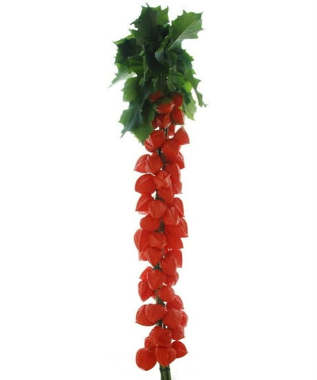ほおずき切り花 葉付き 5本