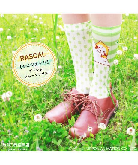 【キャラクター】ラスカル CS-0064【シロツメクサ】プリントクルーソックス