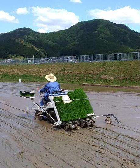 有機肥料・無農薬栽培米 令和2年(2020)産 コシヒカリ 白米 5kg