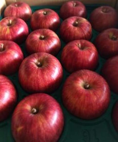 【予約販売・ご予約締切9月末 】釈迦のりんご園<直送>やたかAランク10キロ