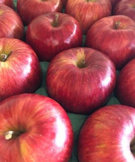 【予約販売・ご予約締切11月15日ごろ 】釈迦のりんご園<直送>サンふじ Aランク10キロ 32玉