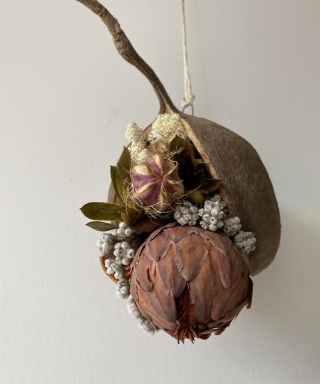 ブッダナッツの飾り サルフレア 送料込み