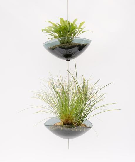 Scaphosepalm S.P.x2 / Dendrochilum S.P / tenellum + Lotus (Recycled glass)