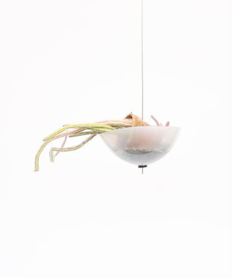 Senecio stapeliformis + Shell Pot (Recycled Glass)