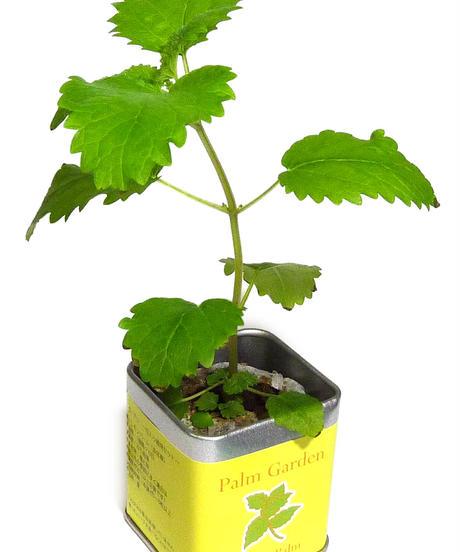 栽培セット 卓上 食べられる植物