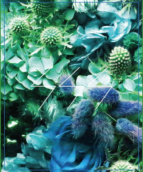 SSS FLOWER 005' featuring Yukio Murata