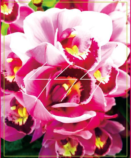 SSS FLOWER 016' featuring Picorin
