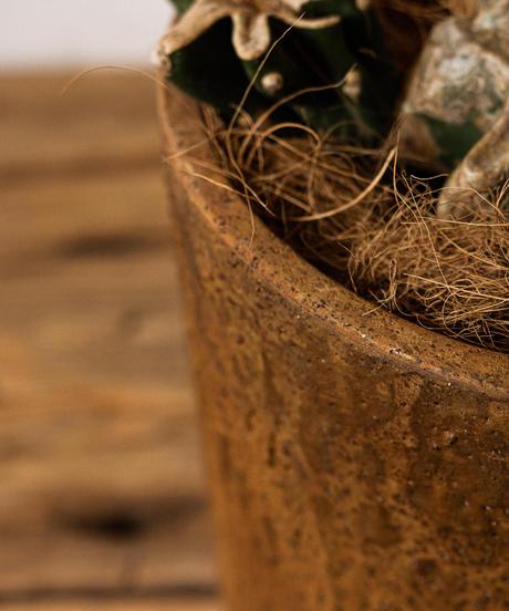 Cereus Hildmannianus | キメンカク