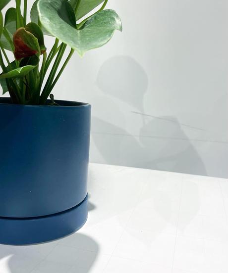 【観葉植物】アンスリウム / sylinder mat pot blue