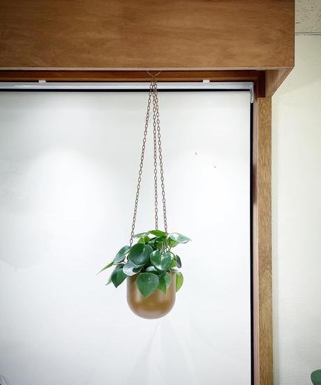 【観葉植物】ペペロミアジェイド ハンギングポットbrown