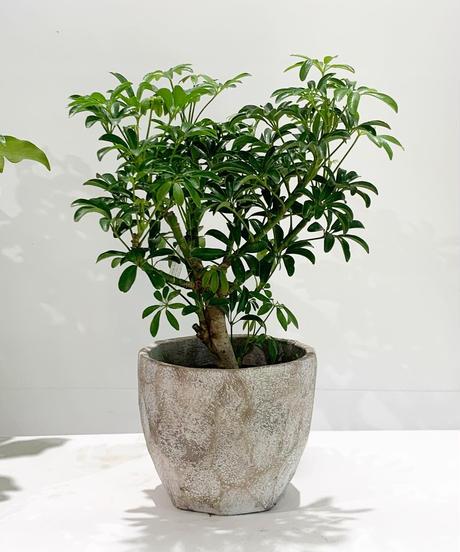 【鉢】cut pot   L