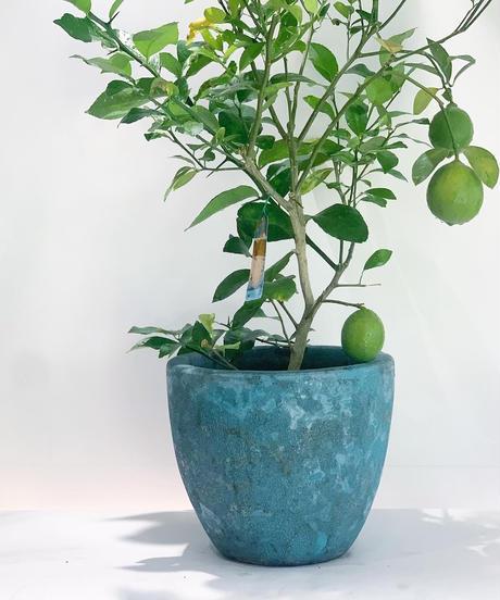 【鉢】サックスブルー陶器鉢