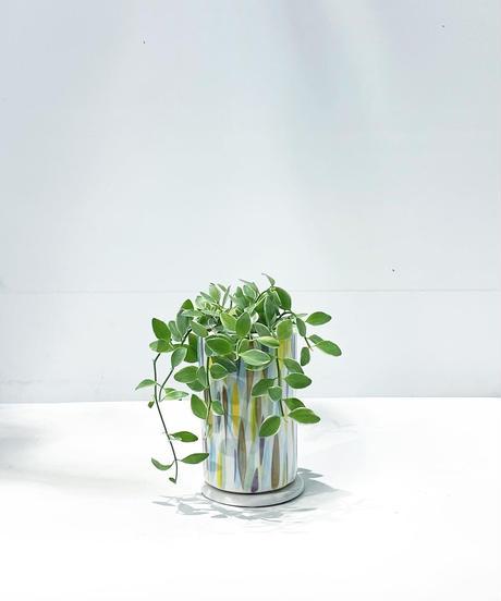【観葉植物】ディスキディアシュガーエメラルディ / suisai pot