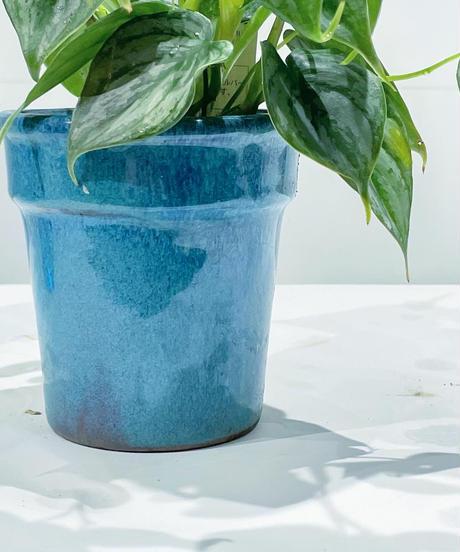 【観葉植物 】フィロデンドロン・ブランティアナム  / blue  glazed pot