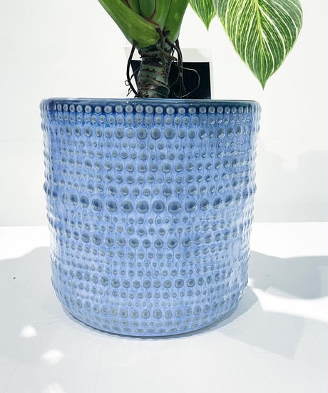 【観葉植物】フィロデンドロン バーキン  / VIRIYA 鉢カバー