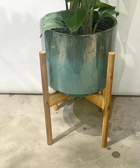 【観葉植物 】オーガスタ / 釉薬鉢トルコブルー / アカシア丸柱ポットスタンド