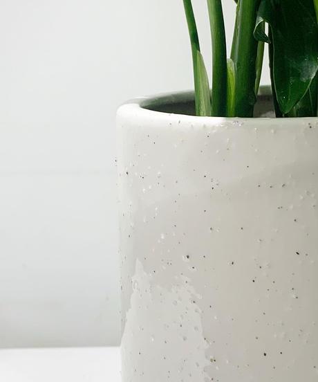【観葉植物】ホヤ カルノーサ バリエガータ glaze tall pot white