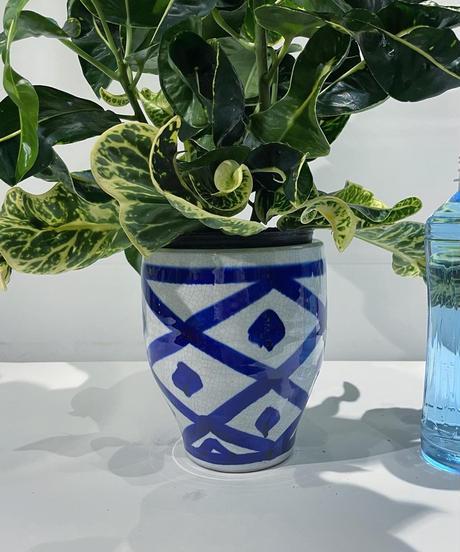 【観葉植物】クロトン  /  イリニア鉢  (鉢カバー)
