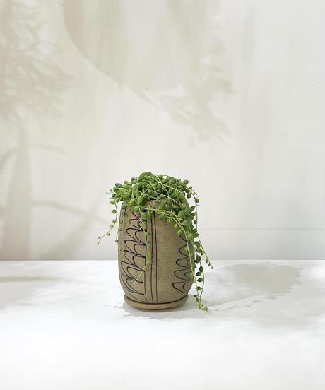 【観葉植物】グリーンネックレス /  モロッカンポット