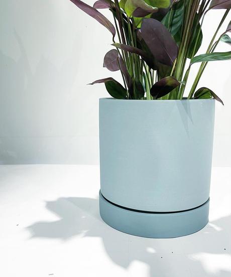 【観葉植物 】クテナンテ・オッペンハイミアナ  /  slynder mat pot green