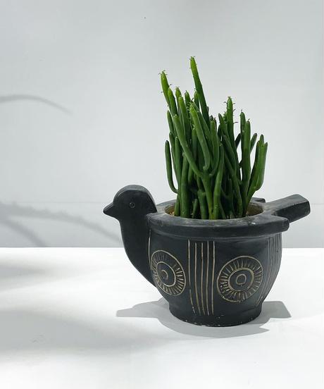 入荷予定【観葉植物】ユーホルビア セドロルム/アフリカンバードポット