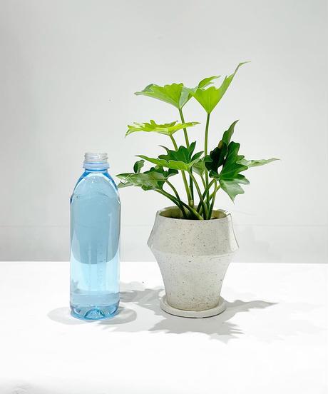 【観葉植物】フィロデンドロン セローム / オルガポット ホワイト