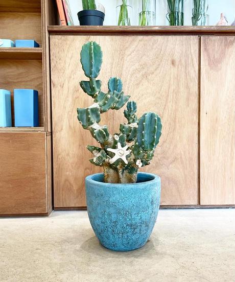 【一点のみ・観葉植物】形が最高に可愛い柱サボテン ブランチ  /  blue pot